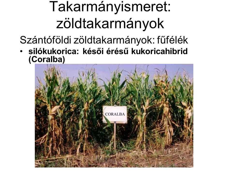 Takarmányismeret: zöldtakarmányok Szántóföldi zöldtakarmányok: fűfélék silókukorica: késői érésű kukoricahibrid (Coralba)