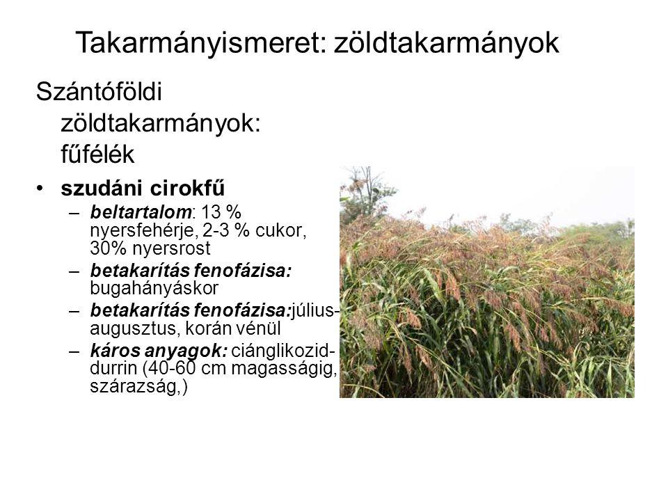 Szántóföldi zöldtakarmányok: fűfélék szudáni cirokfű –beltartalom: 13 % nyersfehérje, 2-3 % cukor, 30% nyersrost –betakarítás fenofázisa: bugahányásko