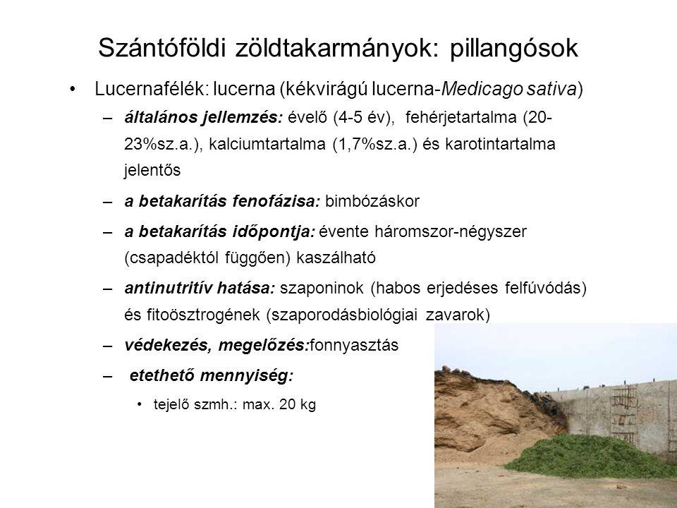 Szántóföldi zöldtakarmányok: pillangósok Lucernafélék: lucerna (kékvirágú lucerna-Medicago sativa) –általános jellemzés: évelő (4-5 év), fehérjetartal