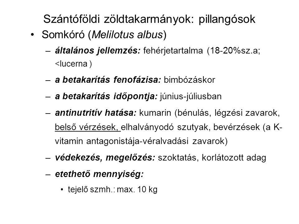 Szántóföldi zöldtakarmányok: pillangósok Somkóró (Melilotus albus) –általános jellemzés: fehérjetartalma (18-20%sz.a; <lucerna ) –a betakarítás fenofá