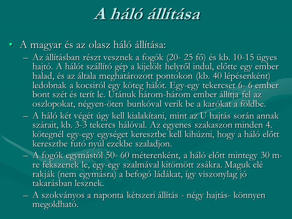 A háló állítása A magyar és az olasz háló állítása:A magyar és az olasz háló állítása: –Az állításban részt vesznek a fogók (20- 25 fő) és kb. 10-15 ü