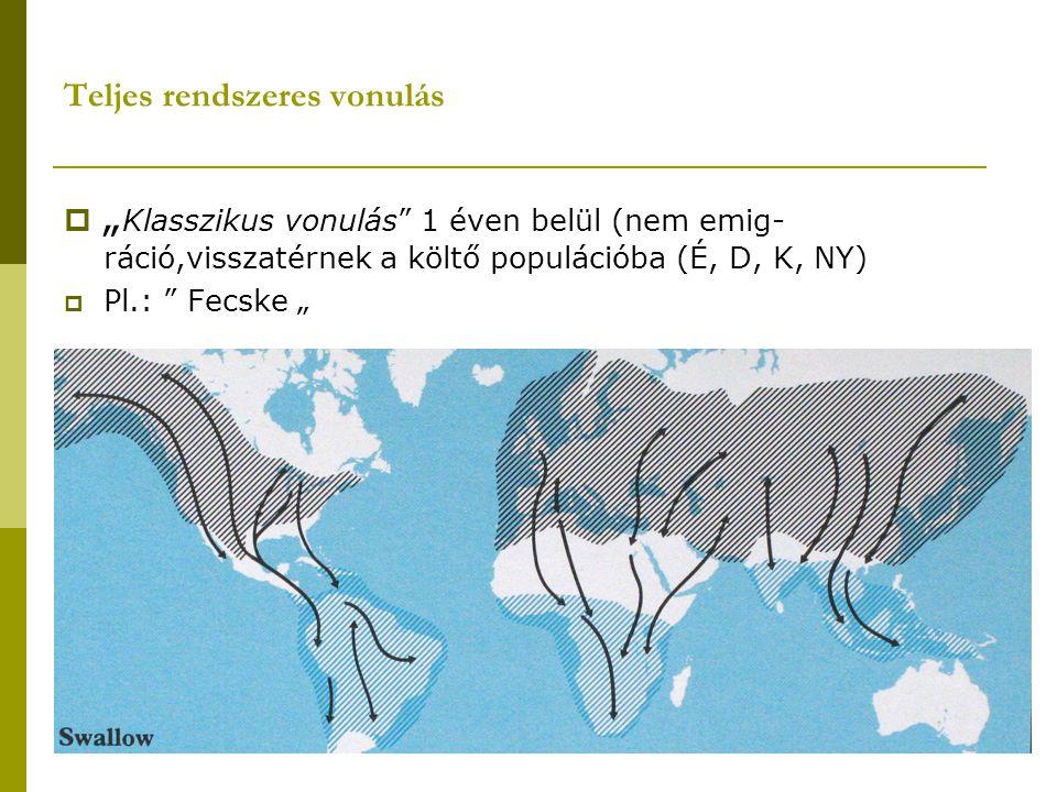 """Teljes rendszeres vonulás  """" Klasszikus vonulás"""" 1 éven belül (nem emig- ráció,visszatérnek a költő populációba (É, D, K, NY)  Pl.: """" Fecske """""""