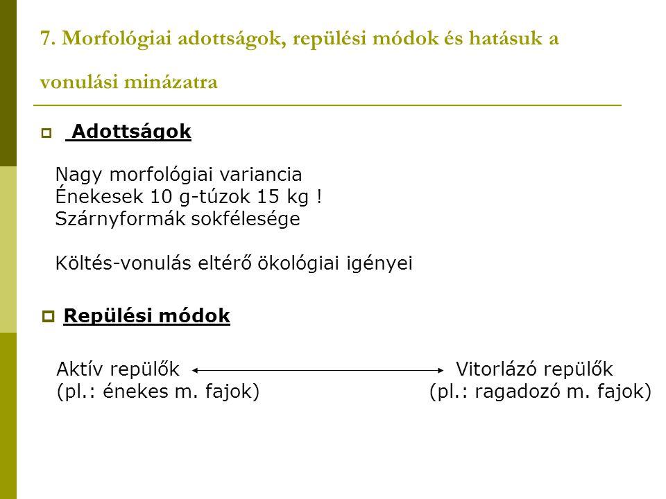 7. Morfológiai adottságok, repülési módok és hatásuk a vonulási minázatra  Adottságok Nagy morfológiai variancia Énekesek 10 g-túzok 15 kg ! Szárnyfo
