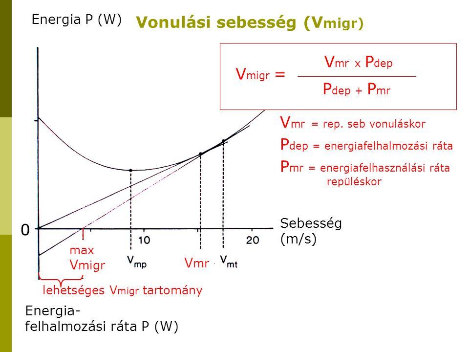 Energia P (W) Energia- felhalmozási ráta P (W) 0 V mr Sebesség (m/s) lehetséges V migr tartomány max V migr Vonulási sebesség (V migr) V migr = V mr x