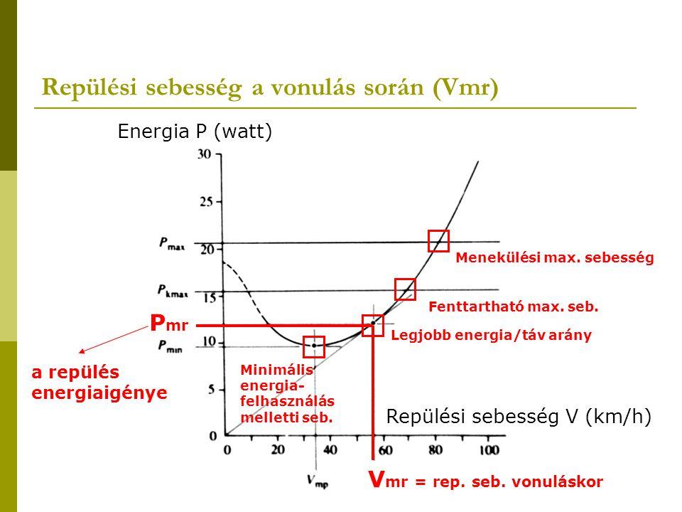 Energia P (W) Energia- felhalmozási ráta P (W) 0 V mr Sebesség (m/s) lehetséges V migr tartomány max V migr Vonulási sebesség (V migr) V migr = V mr x P dep P dep + P mr P dep = energiafelhalmozási ráta P mr = energiafelhasználási ráta repüléskor V mr = rep.