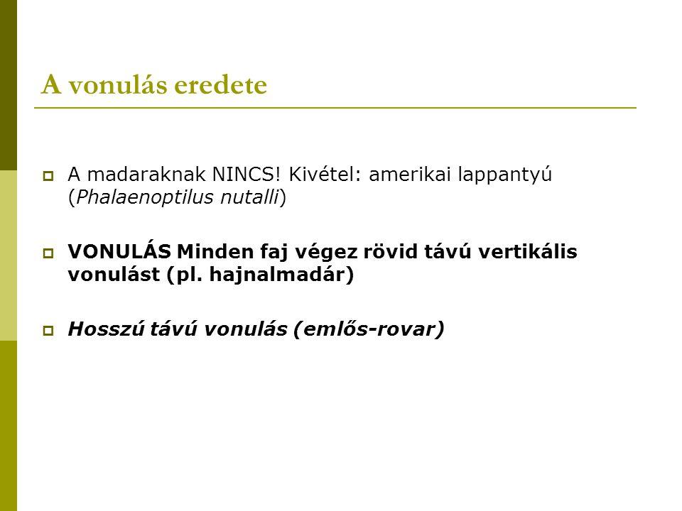 A vonulás eredete  A madaraknak NINCS.