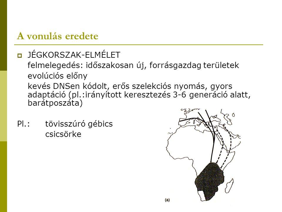 A vonulás eredete  JÉGKORSZAK-ELMÉLET felmelegedés: időszakosan új, forrásgazdag területek evolúciós előny kevés DNSen kódolt, erős szelekciós nyomás, gyors adaptáció (pl.:irányított keresztezés 3-6 generáció alatt, barátposzáta) Pl.:tövisszúró gébics csicsörke
