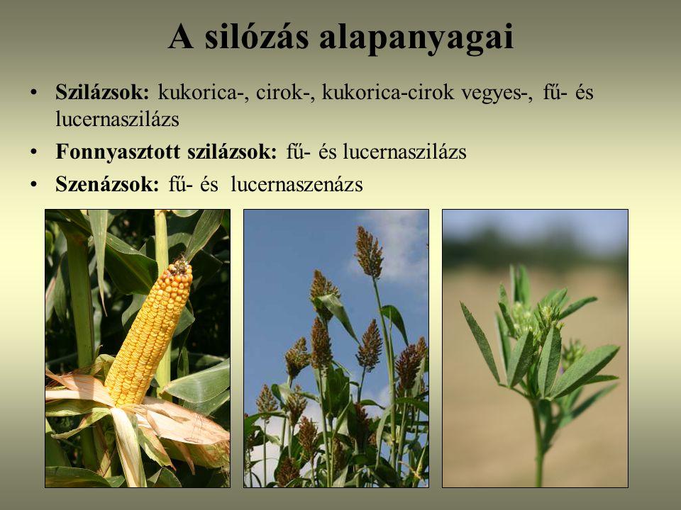A silózás alapanyagai Szilázsok: kukorica-, cirok-, kukorica-cirok vegyes-, fű- és lucernaszilázs Fonnyasztott szilázsok: fű- és lucernaszilázs Szenáz