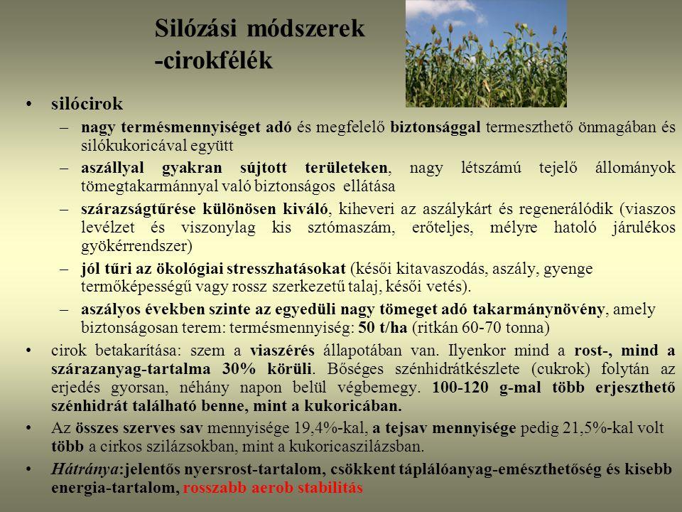 silócirok –nagy termésmennyiséget adó és megfelelő biztonsággal termeszthető önmagában és silókukoricával együtt –aszállyal gyakran sújtott területeke