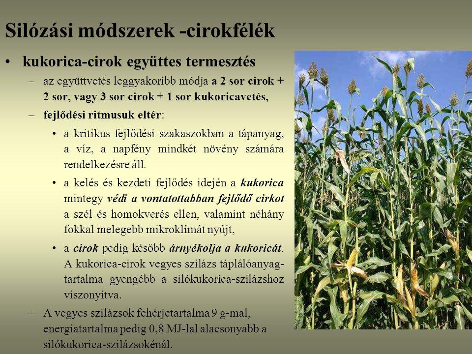 kukorica-cirok együttes termesztés –az együttvetés leggyakoribb módja a 2 sor cirok + 2 sor, vagy 3 sor cirok + 1 sor kukoricavetés, –fejlődési ritmus