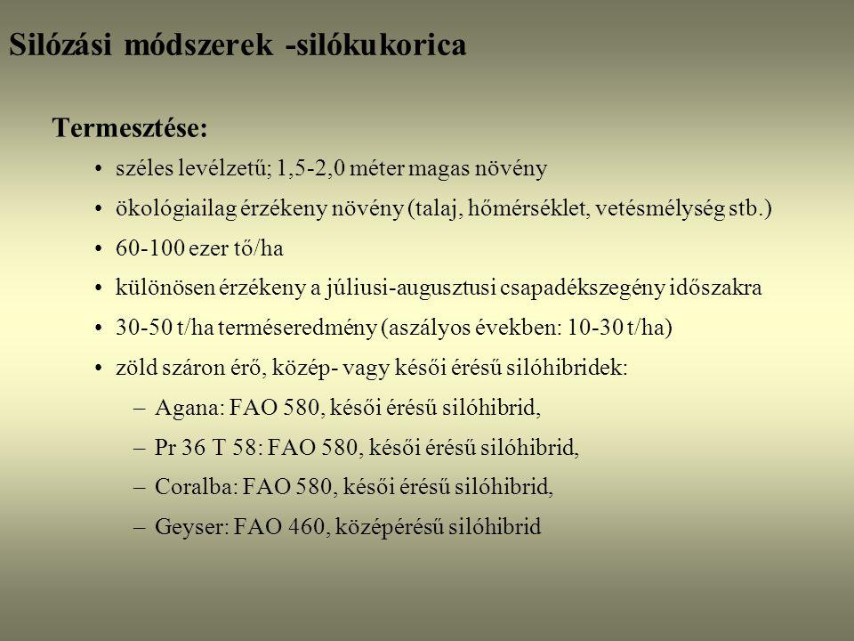 Silózási módszerek -silókukorica Termesztése: széles levélzetű; 1,5-2,0 méter magas növény ökológiailag érzékeny növény (talaj, hőmérséklet, vetésmély