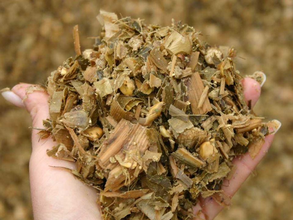 A lucerna táplálóanyag-tartalmának, emészthetőségének és a fenofázisának az összefüggései