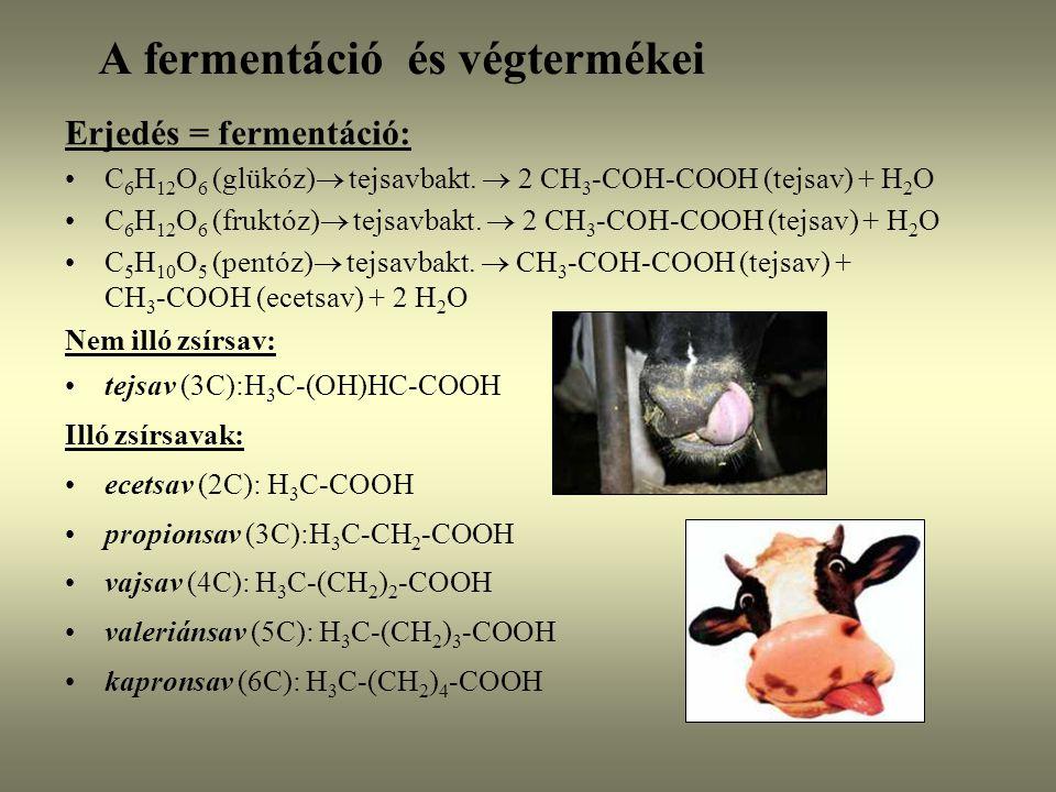 A fermentáció és végtermékei Erjedés = fermentáció: C 6 H 12 O 6 (glükóz)  tejsavbakt.  2 CH 3 -COH-COOH (tejsav) + H 2 O C 6 H 12 O 6 (fruktóz)  t