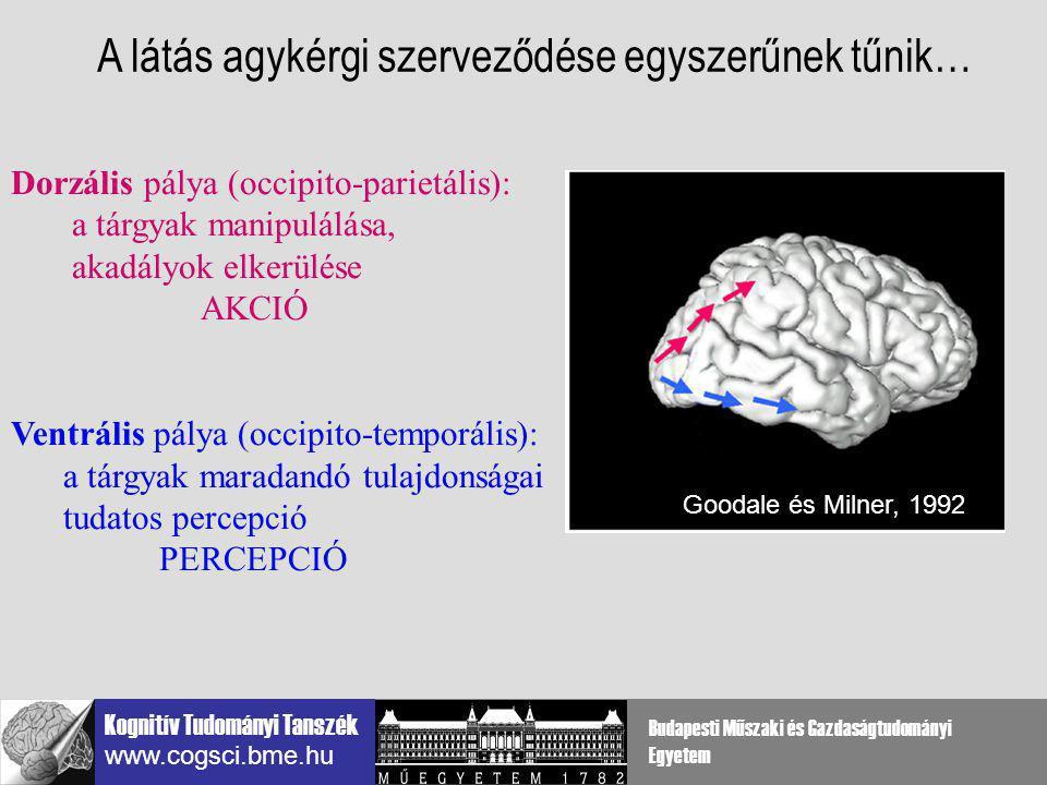 Kognitív Tudományi Tanszék www.cogsci.bme.hu Budapesti Műszaki és Gazdaságtudományi Egyetem