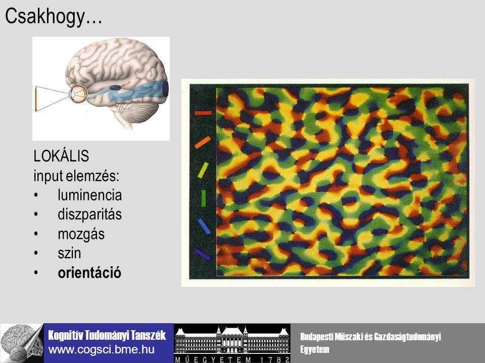 Kognitív Tudományi Tanszék www.cogsci.bme.hu Budapesti Műszaki és Gazdaságtudományi Egyetem lokális agykérgi szűrők a V1-ben több téri skálán