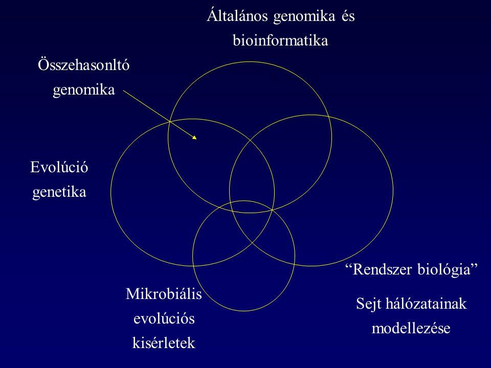 duplikált gén jelenléte: alternatív útvonal jelenléte: A kompenzáció formái AB C D E F A gén A' gén