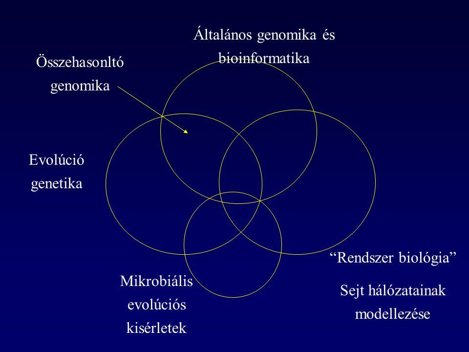 Vizsgálati alany: az élesztő genomléptékű génkiütéses kísérletek adatai (főleg tápanyaggazdag környezetre) a teljes metabolizmusra kiterjedő matematikai modell # leképezés a genotípus és fenotípus között (~700 gén a modellben) # Forster et al.
