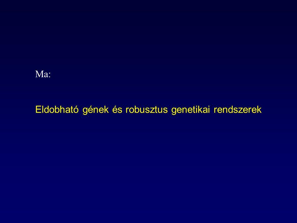 A modell lényege (Palsson és mtsai.) 1)Az anyagcserehálózat rekonstruálása genomikai és biokémiai adatok alapján (enzimatikus reakciók, transzport folyamatok, biomassza-összetevők [X,Y,Z]) 2)Környezetből felvehető tápanyagok (B,E) megadása 3)A sejt növekedési sebességének kiszámítása sejtnövekedés (fitnesz) anyagcsere reakciói Biomassza