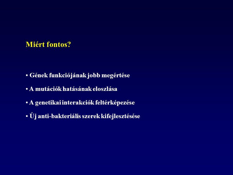 Mikrobiális szelekciós kisérletek előnyei: 1)Rövid generációs idő ( E.