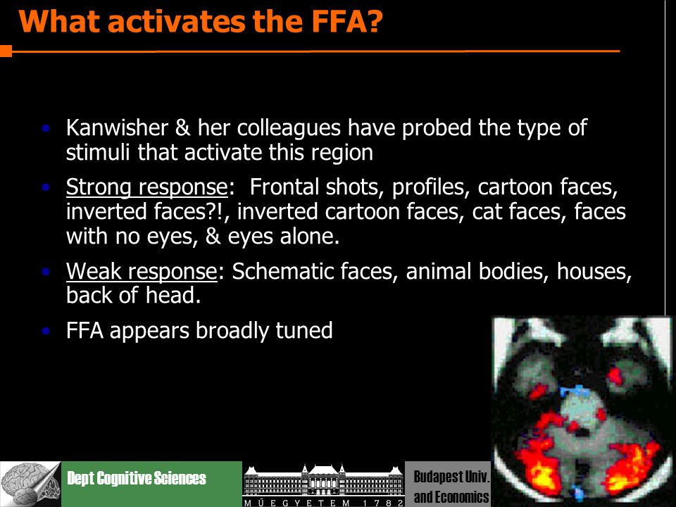 Dept Cognitive Sciences Budapest Univ. Technology and Economics What activates the FFA? Kanwisher & her colleagues have probed the type of stimuli tha