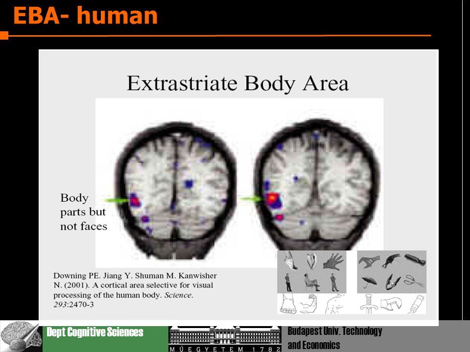 Dept Cognitive Sciences Budapest Univ. Technology and Economics EBA- human
