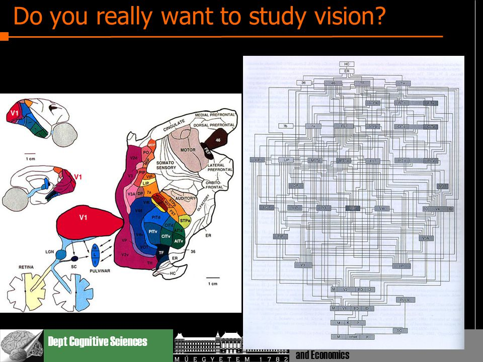 Dept Cognitive Sciences Budapest Univ. Technology and Economics Do you really want to study vision?