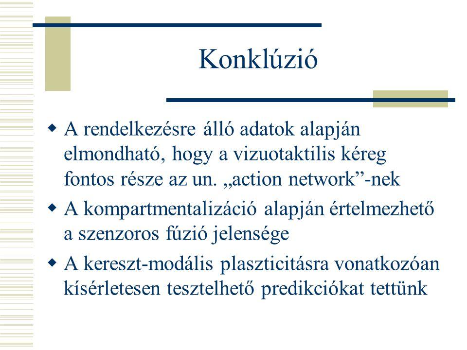 Konklúzió  A rendelkezésre álló adatok alapján elmondható, hogy a vizuotaktilis kéreg fontos része az un.