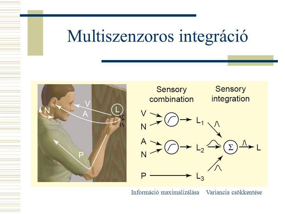 Multiszenzoros integráció Információ maximalizálásaVariancia csökkentése