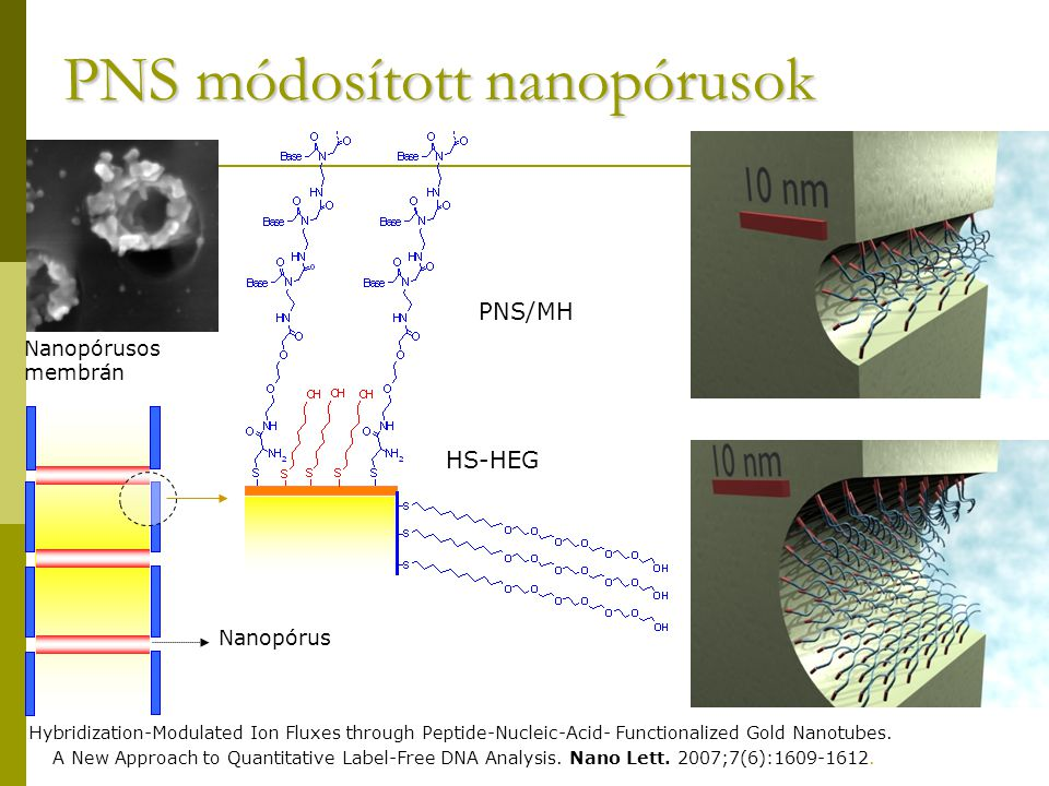 PNS módosított nanopórusok Nanopórusos membrán HS-HEG PNS/MH Nanopórus Hybridization-Modulated Ion Fluxes through Peptide-Nucleic-Acid- Functionalized Gold Nanotubes.