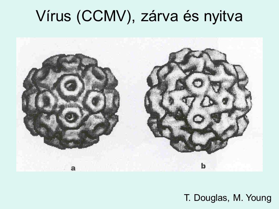 Vírus (CCMV), zárva és nyitva T. Douglas, M. Young
