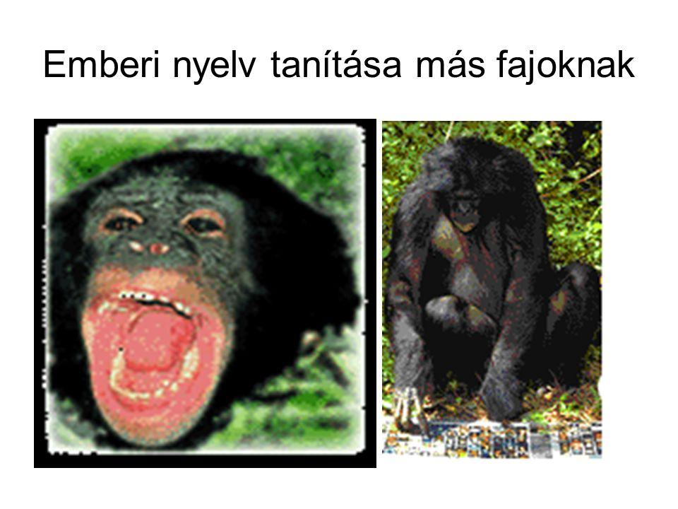 Emberi nyelv tanítása más fajoknak