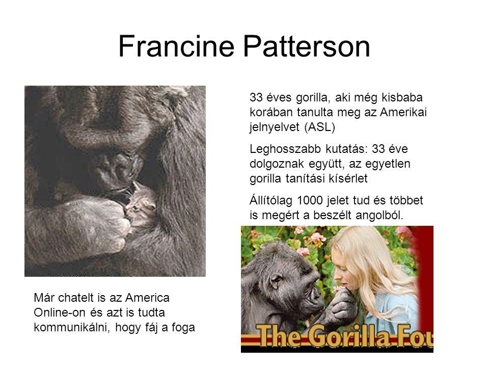 Francine Patterson 33 éves gorilla, aki még kisbaba korában tanulta meg az Amerikai jelnyelvet (ASL) Leghosszabb kutatás: 33 éve dolgoznak együtt, az egyetlen gorilla tanítási kísérlet Állítólag 1000 jelet tud és többet is megért a beszélt angolból.