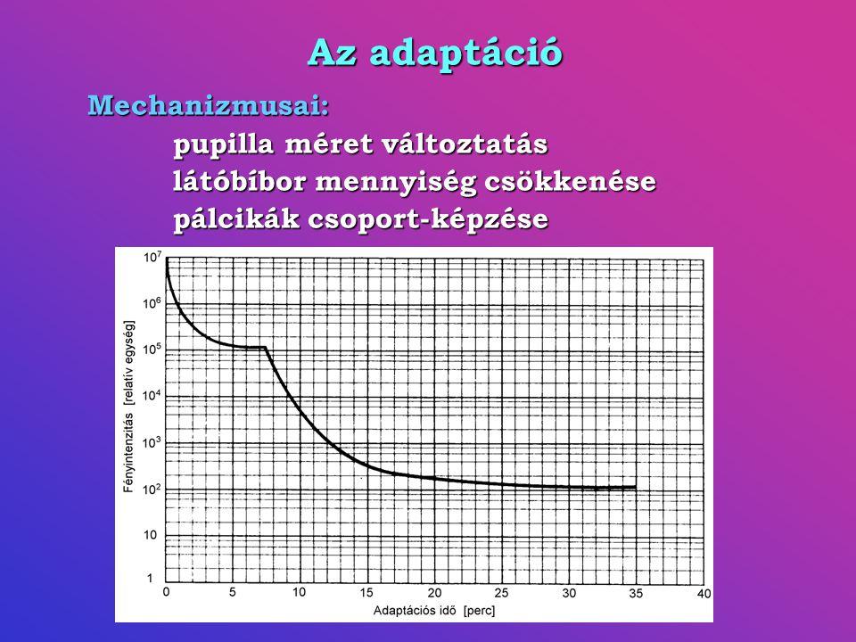 Az adaptáció Mechanizmusai: pupilla méret változtatás látóbíbor mennyiség csökkenése pálcikák csoport-képzése