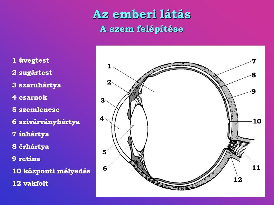 Az emberi látás A szem felépítése 1 üvegtest 2 sugártest 3 szaruhártya 4 csarnok 5 szemlencse 6 szivárványhártya 7 ínhártya 8 érhártya 9 retina 10 központi mélyedés 12 vakfolt