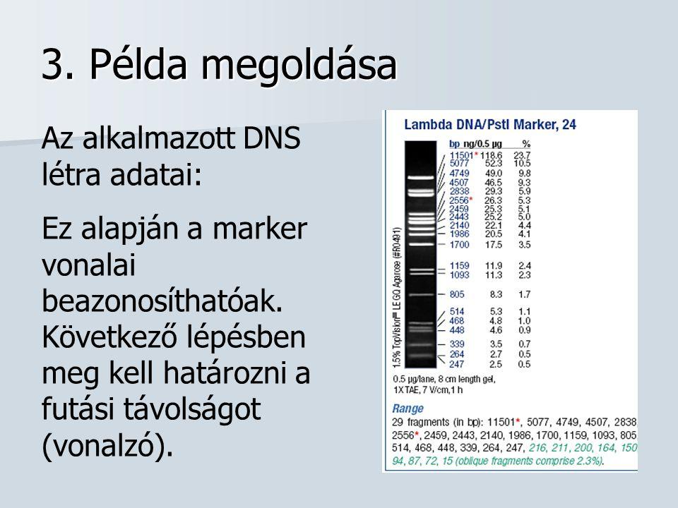3. Példa megoldása Az alkalmazott DNS létra adatai: Ez alapján a marker vonalai beazonosíthatóak. Következő lépésben meg kell határozni a futási távol