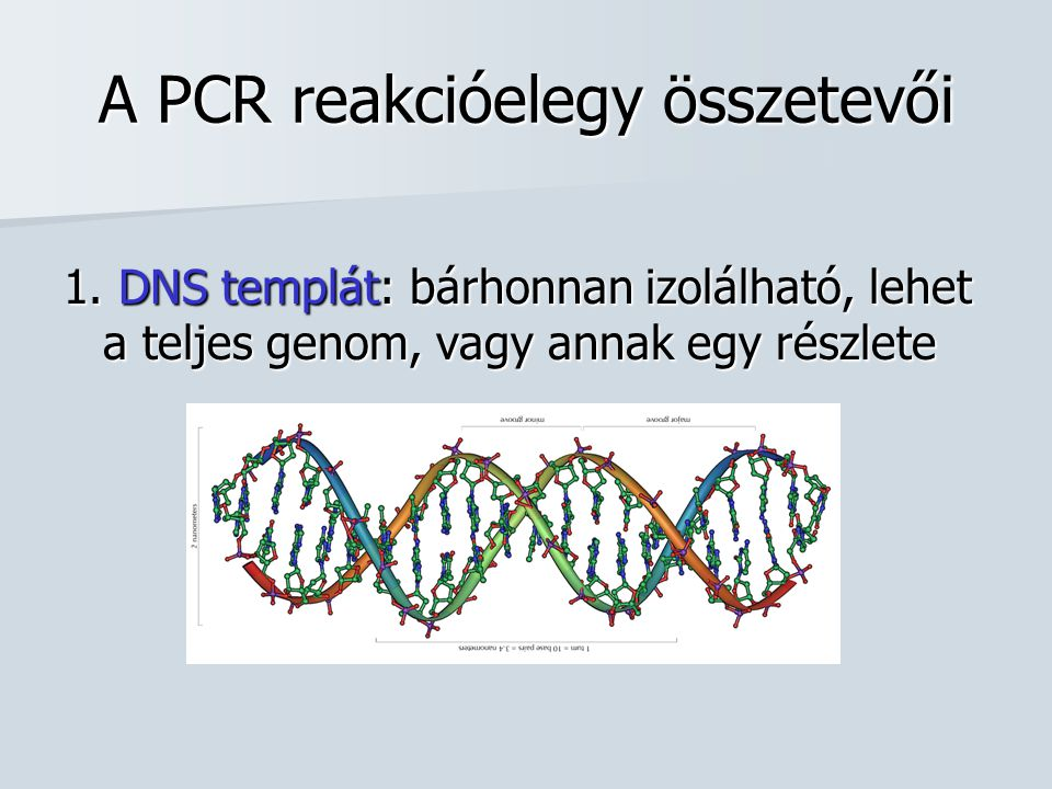 A PCR reakcióelegy összetevői 1. DNS templát: bárhonnan izolálható, lehet a teljes genom, vagy annak egy részlete