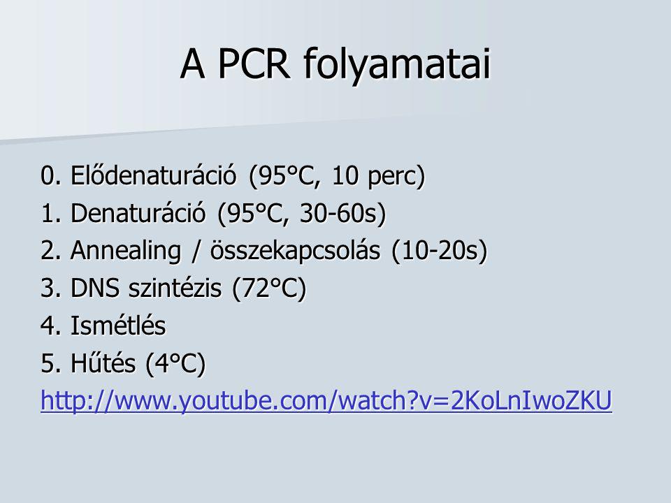 A PCR folyamatai 0. Elődenaturáció (95°C, 10 perc) 1. Denaturáció (95°C, 30-60s) 2. Annealing / összekapcsolás (10-20s) 3. DNS szintézis (72°C) 4. Ism