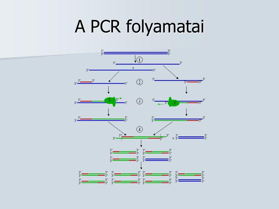 A PCR matematikai leírása Teljes DNS-lánc felszaporítási egyenlete: N=N 0 *2 n Egy DNS szakasz felszaporítási egyenlete: N=N 0 *2 n -2n