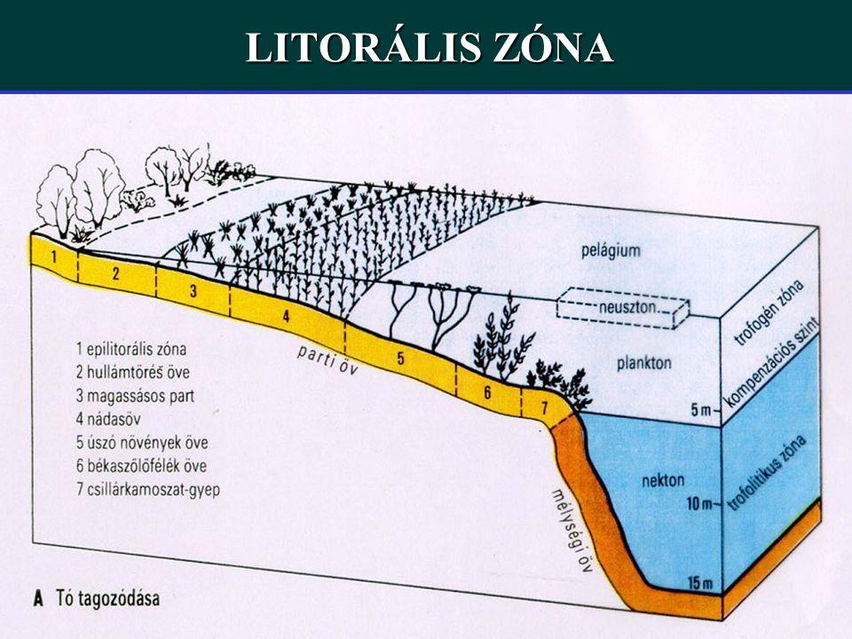 LITORÁLIS ZÓNA