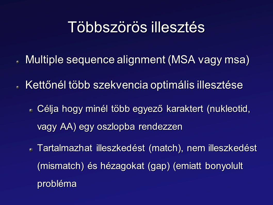 Többszörös illesztés Multiple sequence alignment (MSA vagy msa) Kettőnél több szekvencia optimális illesztése Célja hogy minél több egyező karaktert (