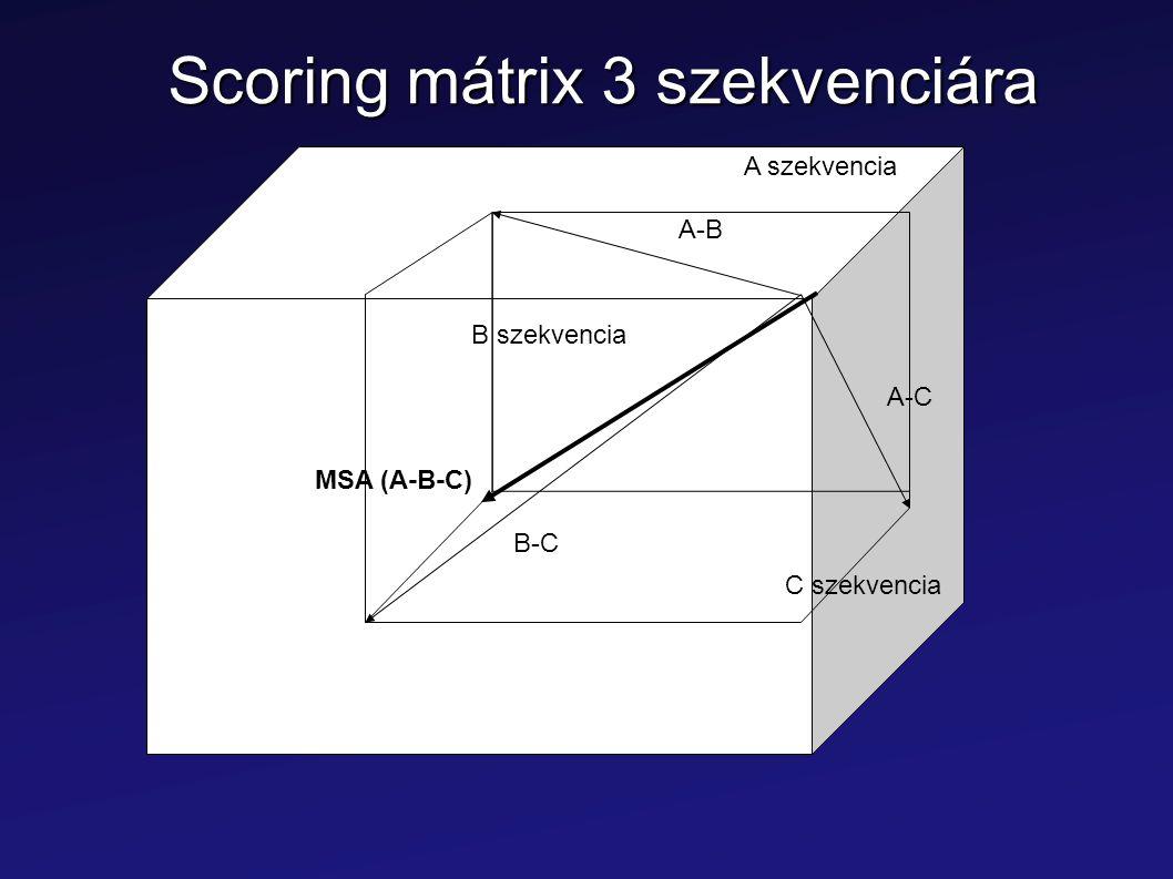 Scoring mátrix 3 szekvenciára A szekvencia B szekvencia C szekvencia A-B B-C A-C MSA (A-B-C)