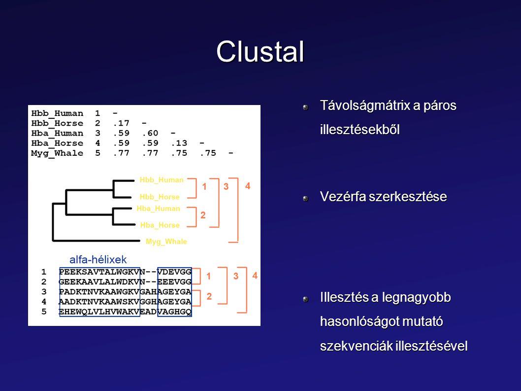 Clustal Távolságmátrix a páros illesztésekből Vezérfa szerkesztése Illesztés a legnagyobb hasonlóságot mutató szekvenciák illesztésével