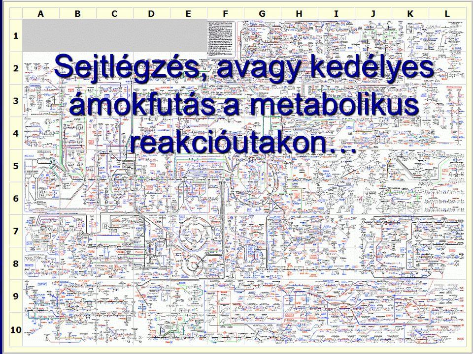 Sejtlégzés, avagy kedélyes ámokfutás a metabolikus reakcióutakon…