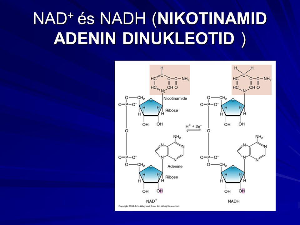 NAD + és NADH (NIKOTINAMID ADENIN DINUKLEOTID )