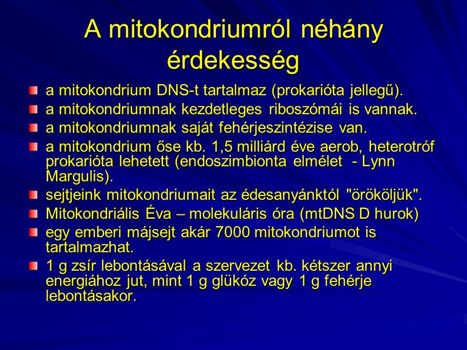 A mitokondriumról néhány érdekesség a mitokondrium DNS-t tartalmaz (prokarióta jellegű). a mitokondriumnak kezdetleges riboszómái is vannak. a mitokon