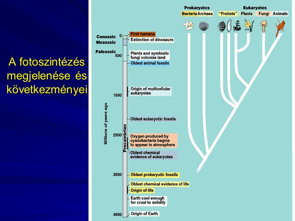 A fotoszintézés megjelenése és következményei