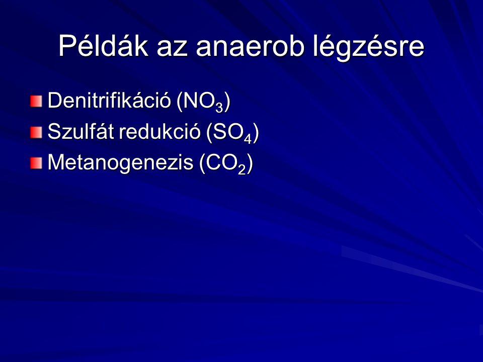 Példák az anaerob légzésre Denitrifikáció (NO 3 ) Szulfát redukció (SO 4 ) Metanogenezis (CO 2 )