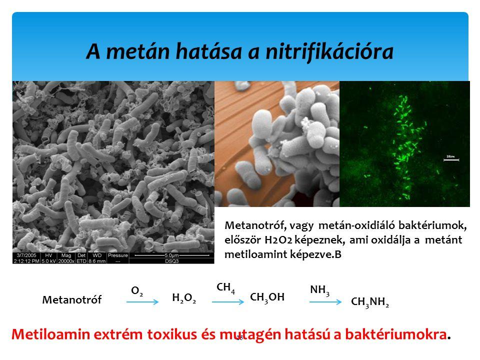 A metán hatása a nitrifikációra 25 Metanotróf, vagy metán-oxidiáló baktériumok, először H2O2 képeznek, ami oxidálja a metánt metiloamint képezve.B Metiloamin extrém toxikus és mutagén hatású a baktériumokra.