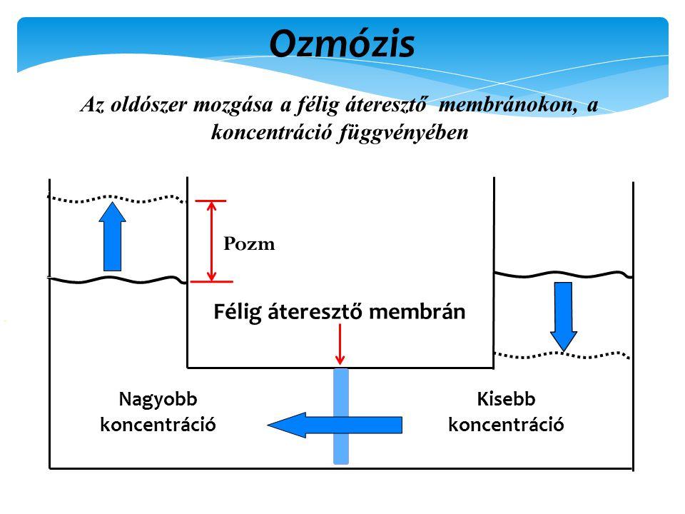Ozmózis Az oldószer mozgása a félig áteresztő membránokon, a koncentráció függvényében Félig áteresztő membrán Nagyobb koncentráció Kisebb koncentráció Pozm
