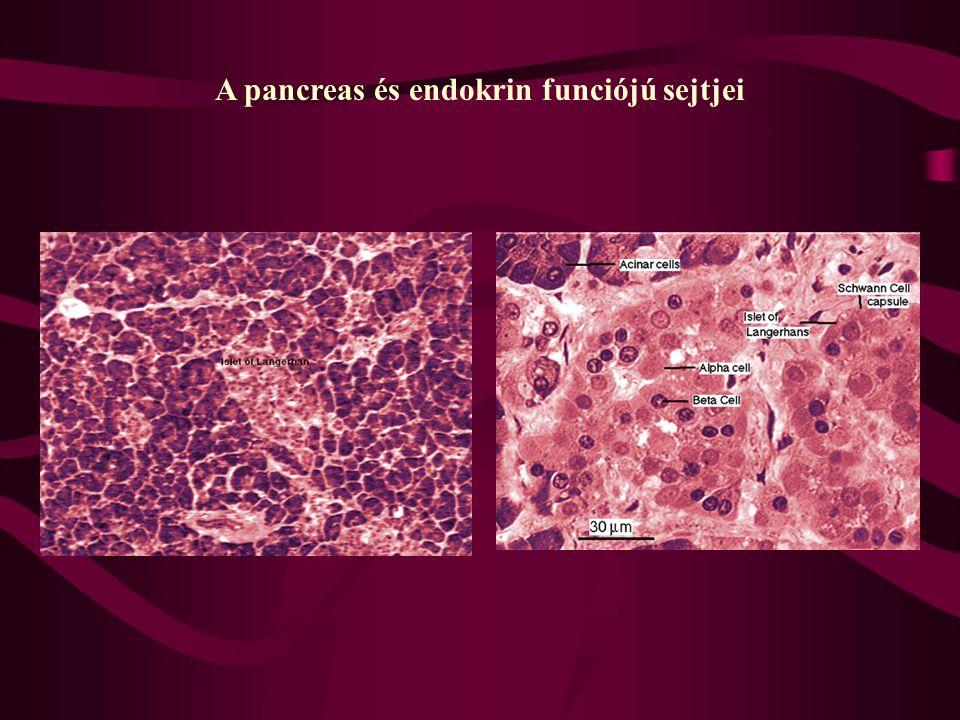 Paul Langerhans és a pankreász szigetsejtjei